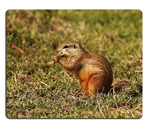 wyrujyu-mousepad-black-wildebeest-or-white-tailed-gnu-connochaetes-gnou-at-krugersdorp-game-reserve-