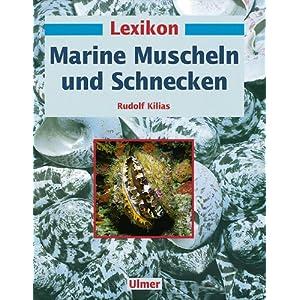 Lexikon Marine Muscheln und Schnecken
