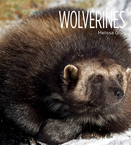 Living Wild: Wolverines Book