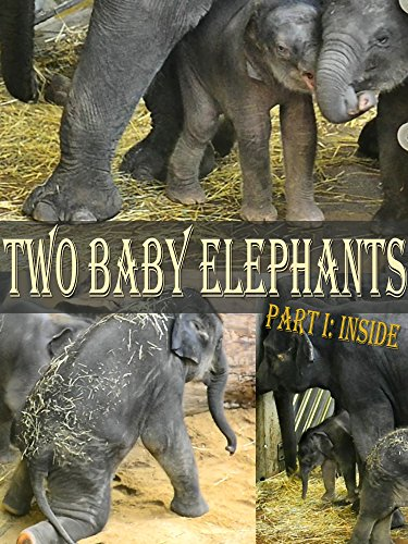 Two Baby Elephants, Part I: Inside