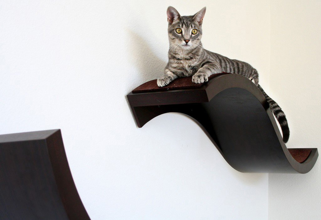 Wall Shelves For Cats To Climb On WebNuggetzcom