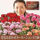 【送料無料!遅れてもうれしい母の日ギフト】花色おまかせカーネーション5号鉢植