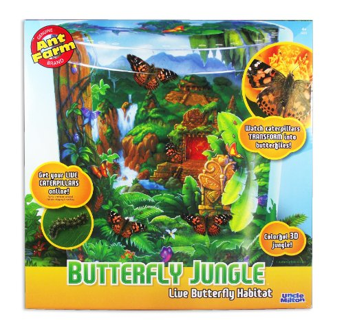 Imagen de El tío Milton Butterfly Jungle