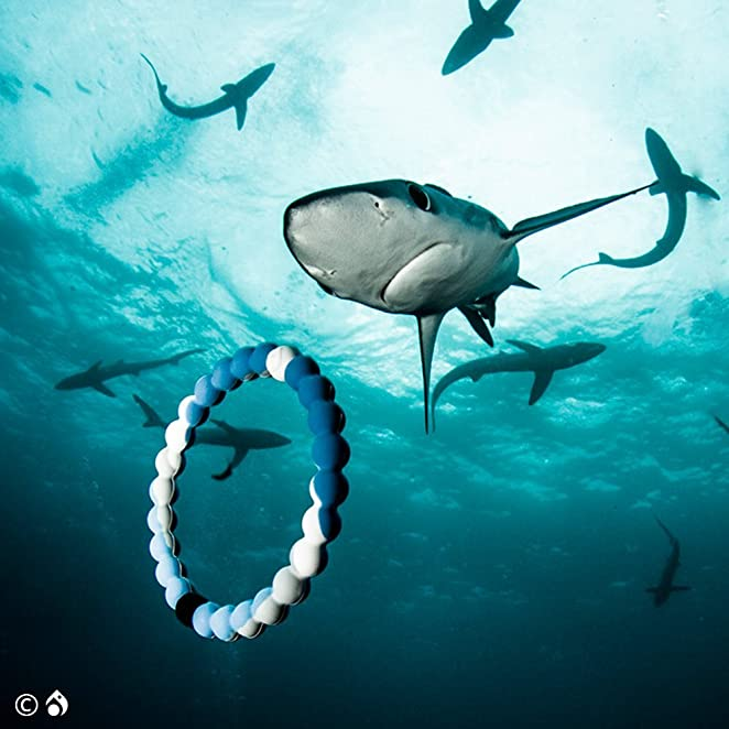 Amazon.com: Lokai Shark Limited Edition Bracelet - Size Large: Jewelry