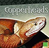 Copperheads (Snakes)