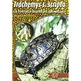 Trachemys scripta scripta - la tortuga de orejas amarillas (Especie Por Especie)