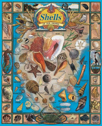 Shells of our Shores - 1000 Pc Puzzle