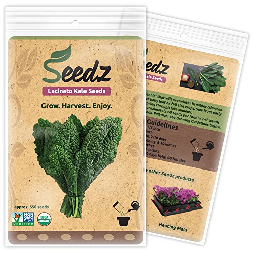 CERTIFIED ORGANIC SEEDS (Approx. 550) - Lacinato Kale - Heirloom Seeds Kale Collection - Non GMO, Non Hybrid - USA (Heat Tolerant Tomato Seeds compare prices)