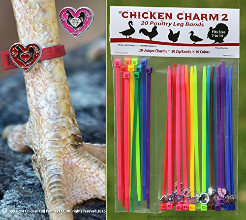 20-chicken-charm-2-poultry-leg-bands-new-set-from-chicken-hill-fit-sizes-7-to-14