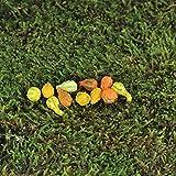 Fairy Garden - Mini Gourds - Assorted Set of 11