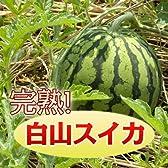 完熟『白山すいか』10kgアップ【5Lサイズ】2個セット【発送:8/5~8/20】
