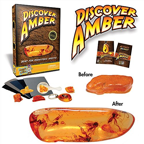 Discover Amber Science Kit - Polish Real Amber!