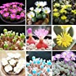 100pcs Succulents Seeds Lithops Pseudotruncatella Office Bonsai Plants Seeds for Home & Garden
