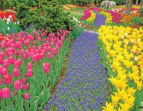 Springbok Trail of Blooms Jigsaw Puzzle, 500-Piece
