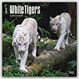 White Tigers 2017 Square
