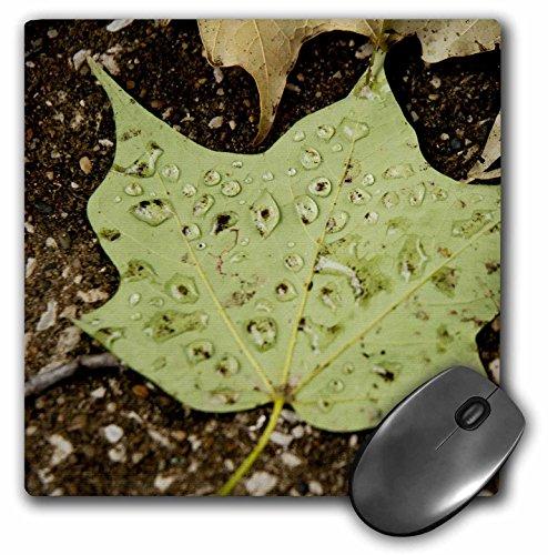 RinaPiro - Nature - Green leaf with drops of rain - MousePad (mp_211747_1)