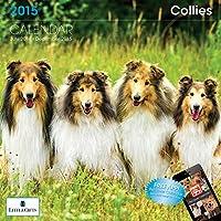 Little Gifts Collie 2015 Calendar (8134)
