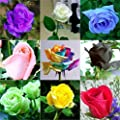 (Rose1-9 *Ambizu*) This Order Include 9 Packs Each Color 50 Seeds Chinese Rose Seeds - Rainbow Pink Black White Red Purple Green Blue Rose Seeds