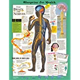 Blueprint for Health Your Brain & Nervous System Chart Laminated