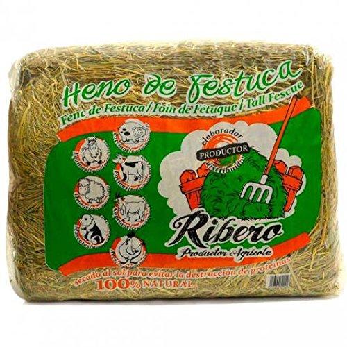 heno-de-festuca-10-kg-conejos-y-roedores