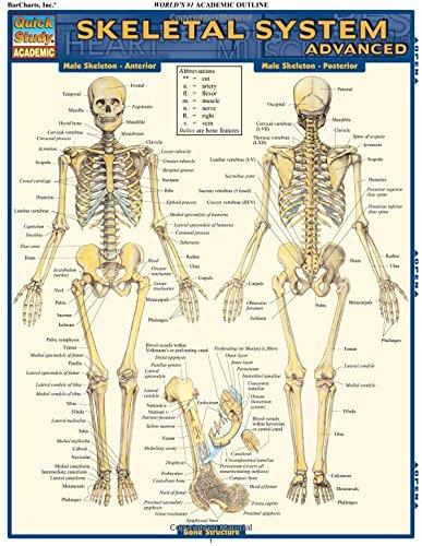 Skeletal System: Advanced (Quick Study: Academic)