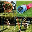 second hand dog agility equipment
