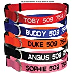 Custom Embroidered Dog Collar - Includes Personalized Pet Tag for Added Safety and Pet ID from DogCollars