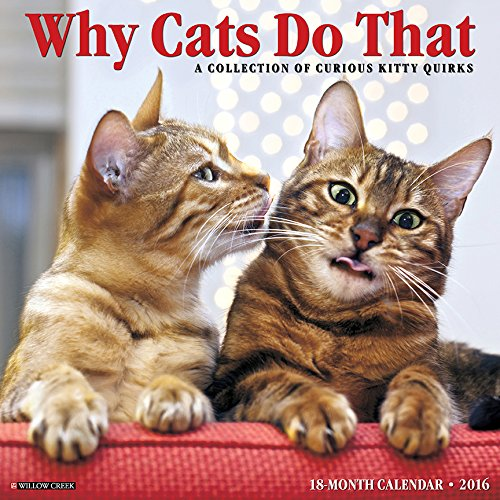 2016 Calendars For Cat Lovers Christmas Gifts For Everyone