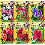 Airex Vinca,Gomphrena Mixed,Morning Glory,Zinnia,Cockscomb,Balsam Seeds ( Pack Of 25 Seeds Per Packet)