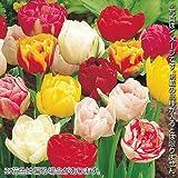 国華園 チューリップ球根 八重咲チューリップ福袋 40球以上(4~5品種見計らい・名称付)