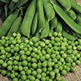 1 X PACK KELVEDON WONDER PEA SEEDS GROWING HEALTHY GARDEN FOOD BEANS PEAS SEEDS