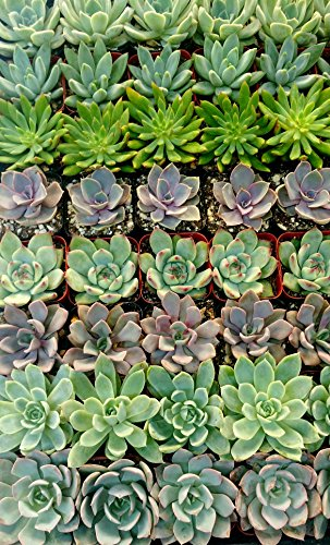 128 Beautiful Succulent Wedding Favors by Shop Succulents