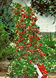 200 Count Lot of Climbing Strawberry Seeds