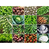 Vegetable Seeds Kit - Chilli, Beet Root, Onion White, Coriander, Brussels Sprouts, Cabbage, Lettuce, Carrot Nantes...