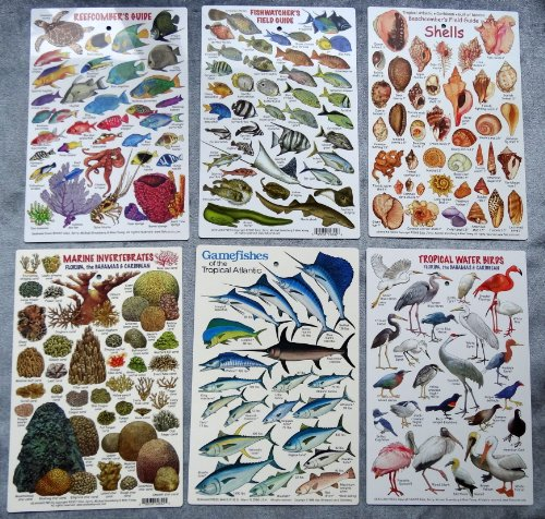 """Tropical Atlantic Marine Life"" Waterproof Id Cards, Set Of 6"
