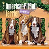 img - for American Pit Bull Terrier Puppies 2016 Mini 7x7 (Multilingual Edition) book / textbook / text book