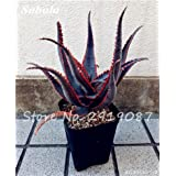 New! 20 Pcs Colorful Cactus Rebutia Variety Mix Exotic Aloe Seed Cacti Rare Cactus Office Edible Beauty Succulent Bonsai Plant 18 (Color: 18, Tamaño: Show In Picture)