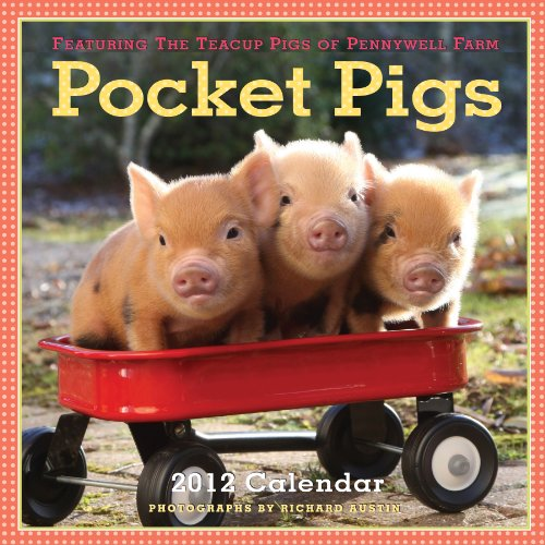 Miniature teacup pigs teacup pigs pocket pigs 2012 calendar the teacup pigs of pennywell farm voltagebd Gallery