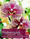 Phalaenopsis: Die schönsten Sorten - die beste Pflege