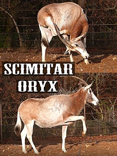 Scimitar oryx on Amazon Prime Instant Video UK