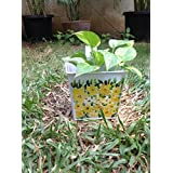 The Garden Store Hand Painted Tin Planters