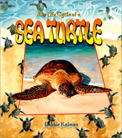 Sea Turtle (Life Cycle)