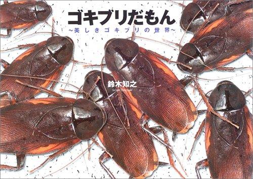 ゴキブリの画像 p1_19