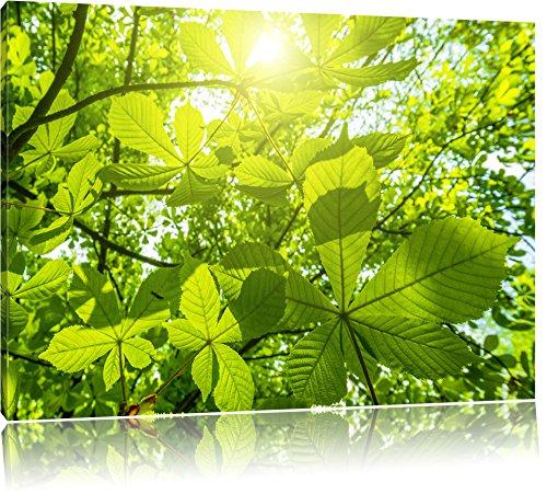 Foglie verdi su tela, Immagini XXL completamente incorniciati con grandi cornici di cuneo, immagine della parete stampa artistica con cornice, più economico di pittura o foto, senza manifesti o poster, Leinwand Format:100x70 cm