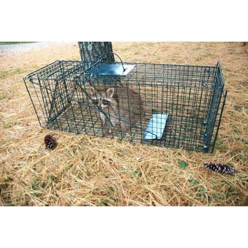 Pet Trex Animal Or Pet Trap