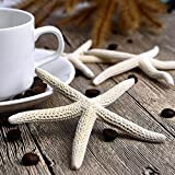Mudder 10 Pieces White Natural Pencil Finger Starfish Wedding Decor 3 - 5 Inch