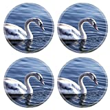Coasters Young swan on the river with a dark blue background Image 36801484 by MSD Round Coaster (4 Piece) Set Cup Mat Mug Can Water Bottle Drink Customized Stain Resistance Collector Kit Kitchen Table Top Desk Reviews