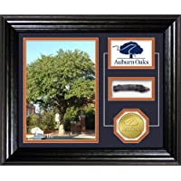 Auburn Oaks Authentic Oaks Desktop Photo Mint