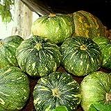 Biocarve Pumpkin - Pack of 20 seeds