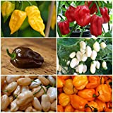 "50 Fresh Seeds, Habanero Pepper ""Color Blend"" (Capsicum annuum) Seeds by Seed Needs"